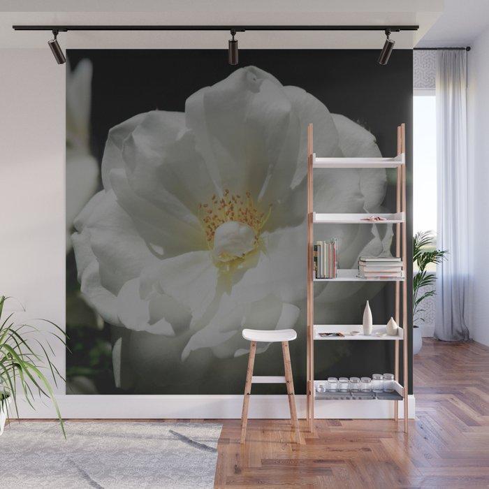 White Roses On Black Wall Mural