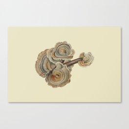 Polyporus versicolor Canvas Print