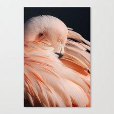 Portrait Of A Flamingo Canvas Print