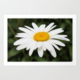 Bright White Daisy Art Print