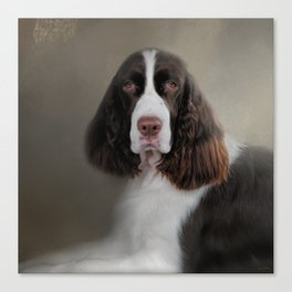 Waiting Patiently - English Springer Spaniel Canvas Print