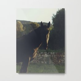 Wild stallion photo, black horse and italian sunset, original print for animal lovers, landscape Metal Print