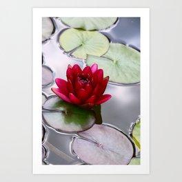 Dark Red Water Lily Art Print
