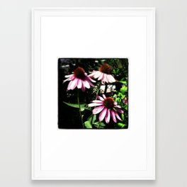 Coneflowers Framed Art Print