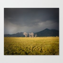 Lone Trees in Taos, New Mexico Canvas Print