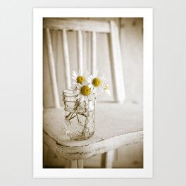 Simple White Daisy Flowers Art Print