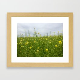 Field of Green and Gold Framed Art Print
