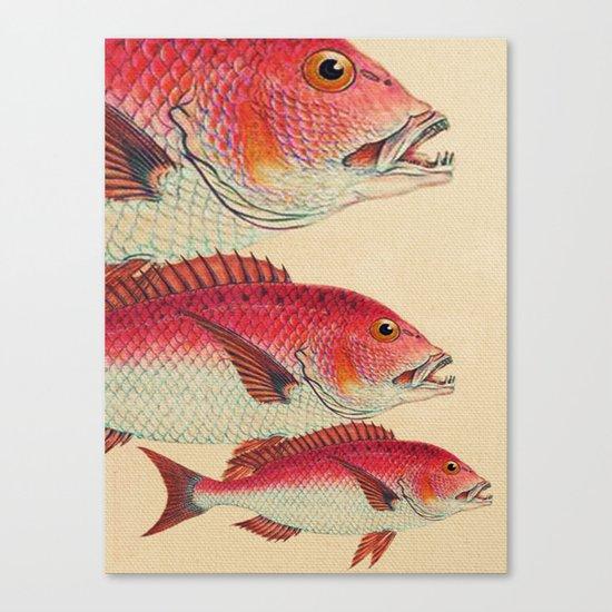 Fish Classic Designs 7 Canvas Print
