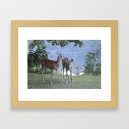 Early Evening Visitors Young Deer -Debra Cortese photo art Framed Art Print