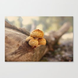 Mushrooms on tree trunk, autumn impression Canvas Print