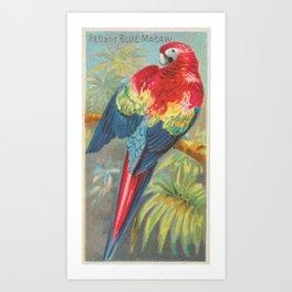 Vintage Illustration of a Macaw Parrot (1889) Art Print