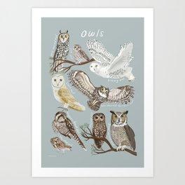 Owls Illustrated Chart Art Print