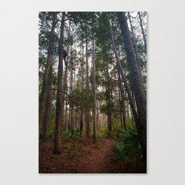 Walking Through the Tall Trees Canvas Print