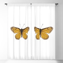 """Butterfly species Acraea issoria """"Yellow Coster"""" Blackout Curtain"""