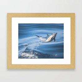 Uncommon Dolphin Framed Art Print