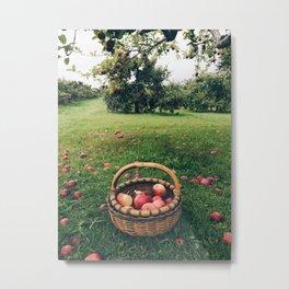 Apple Picking in the Berkshires Metal Print