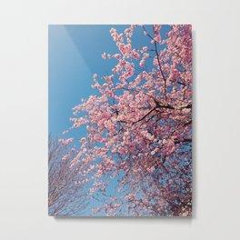 Warming blossom Metal Print