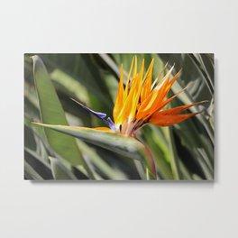 Bird of Paradise Flower Metal Print