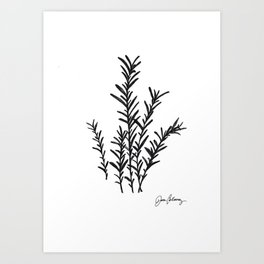 Rosemary herb Black and white pencil and ink sketch, by Jason Callaway Art Print