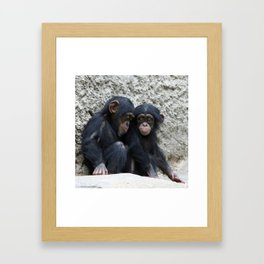 Chimpanzee 002 Framed Art Print