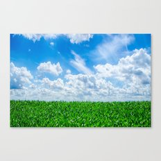 Green grass and blue sky Canvas Print