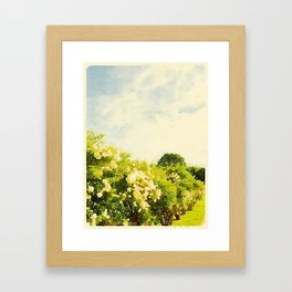 Hydrangea Bushes, Kennebunkport, Maine Framed Art Print