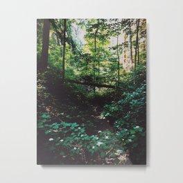 McCormick's Creek State Park Metal Print