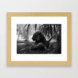 Tiger Eating Framed Art Print