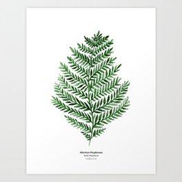 Botanical III - Watercolor Fern Art Print
