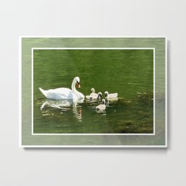 Swans, mother and little ones Metal Print