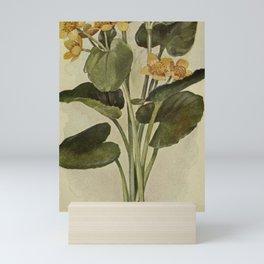Vintage Botanical Print - Marsh Marigold Mini Art Print