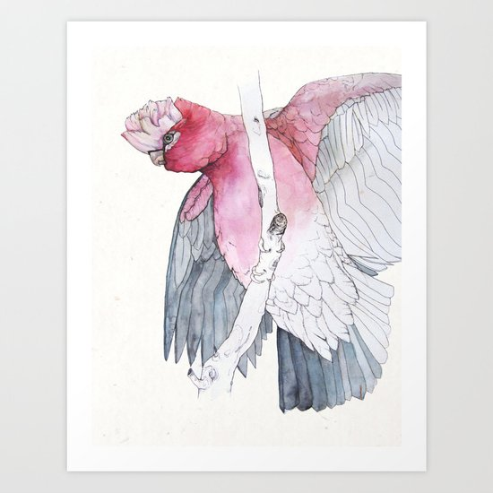 The galah (Eolophus roseicapilla) rose-breasted cockatoo by clarekellyillustrator