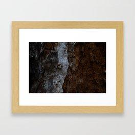 Kings Canyon Tree Framed Art Print
