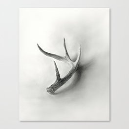 Lost and Found - Deer Antler Pencil Drawing Canvas Print