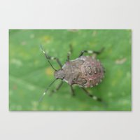 beetle Canvas Prints featuring beetle by Dottie