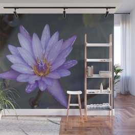 Water Lily purple Wall Mural