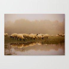 Foggy Sheep Canvas Print