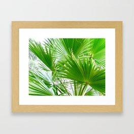 Fan Palm Leaves Framed Art Print