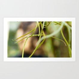Green Plant Twigs Art Print