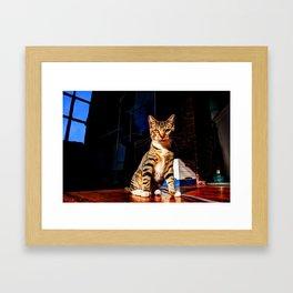 This Humble Kitten.. Framed Art Print