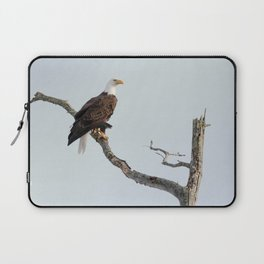 Bald Eagle in the tree Laptop Sleeve