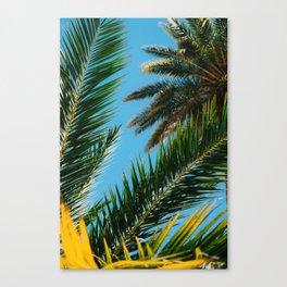 Florida Palm Trees Canvas Print