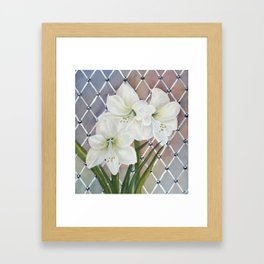 Amaryllis lily Flowers Framed Art Print