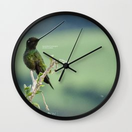 Sword-billed Hummingbird, in Ecuador highlands Wall Clock