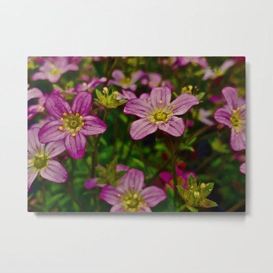 Sweet Little Pink Flowers Metal Print