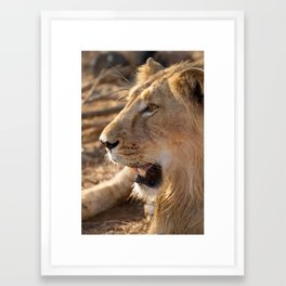 Asiatic Lion 4, Gir Forest, Gujrat, India Framed Art Print