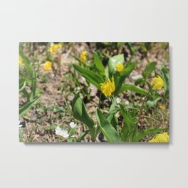 Lillies of Glacier Metal Print