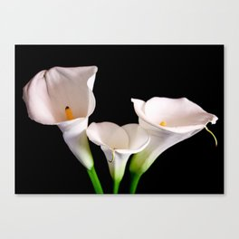 Zantedeschia #2 Canvas Print