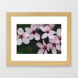 Pink flower 2 Framed Art Print