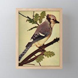 Neltje Blanchan - Bird Neighbours (1903) - Blue Jay Framed Mini Art Print